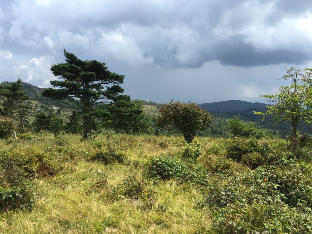 Open meadows with blueberry bushes and rhododendron abound on the balds