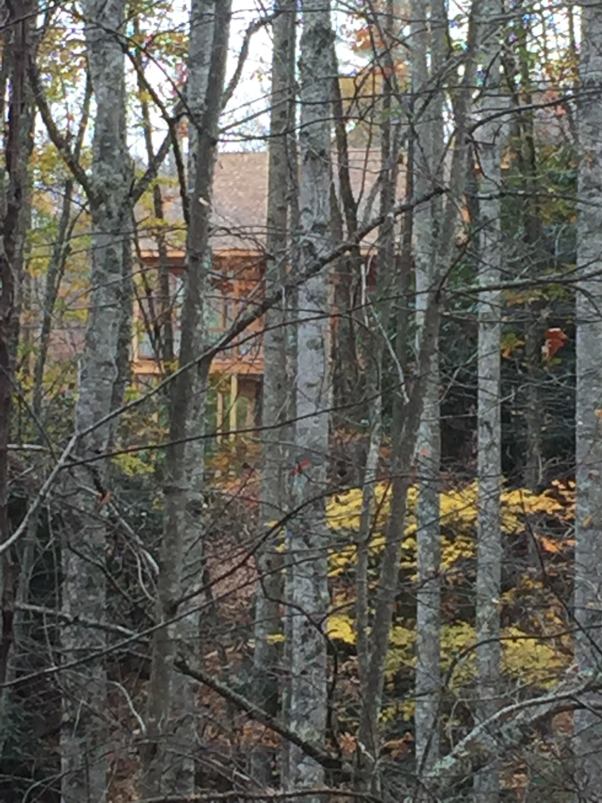 One view of the house from Bear Paw Trail