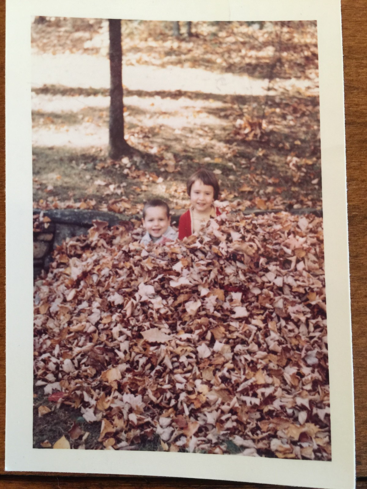 The pile of leaves