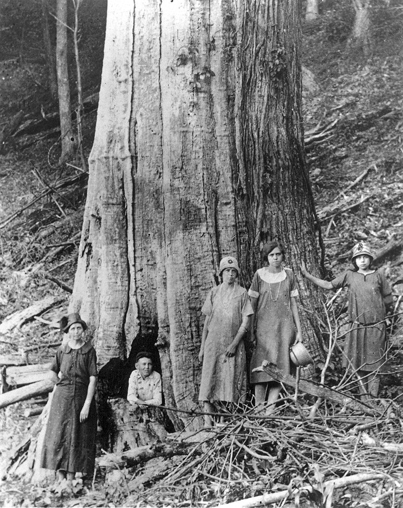 The Family of James and Caroline Shelton pose by a large dead Chestnut Tree in Tremont Falls, Tennessee circa 1920. Courtesy of Great Smoky Mountains National Park Library